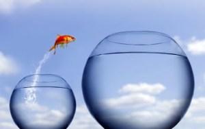 Salto al Éxito / Cursos Online Internet Academy777